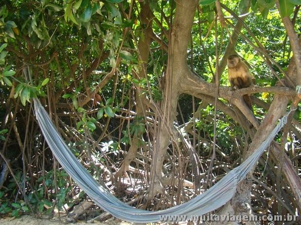 macaco rio vassouras 5