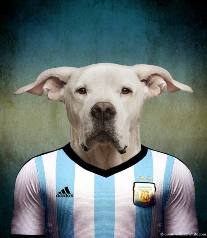 todas raças de cachorros do mundo