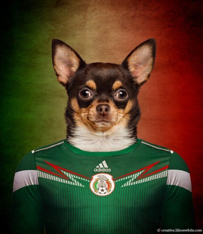 menor raça de cachorro do mundo