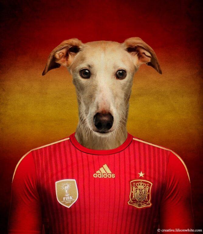Galgo espanhol - Espanha
