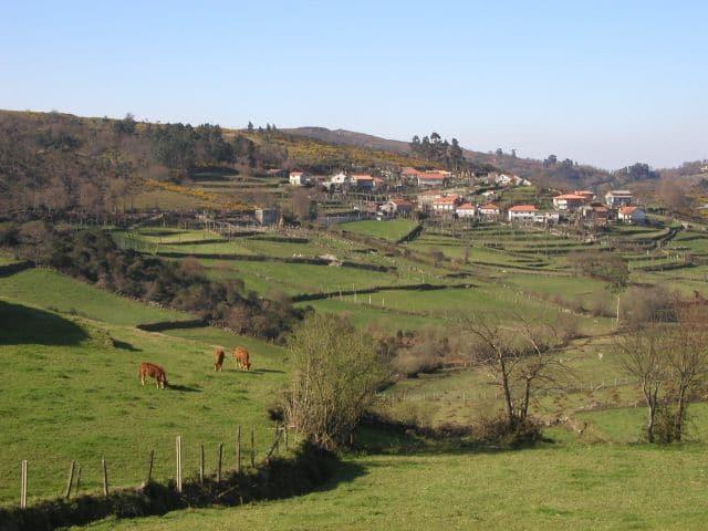 Bois pastam em Vila Verde | foto - Divulgação