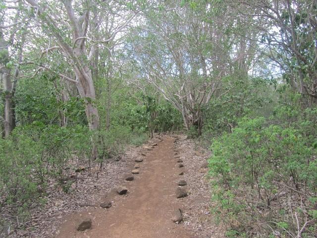 trilhas em fernando de noronha