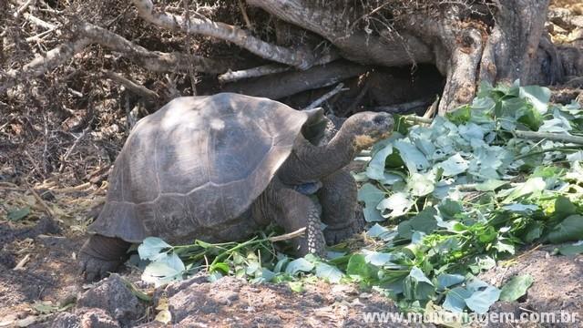 arquipélago galápagos