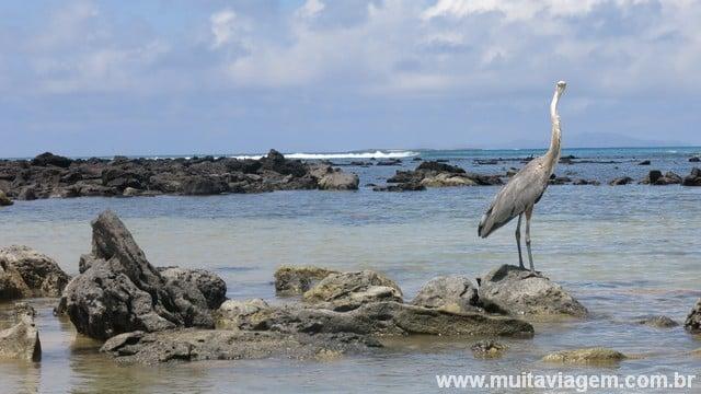 praia no Equador Galápagos