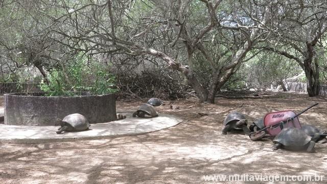tartarugas galápagos vivem mais de 100 anos
