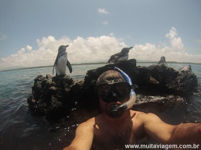 Galápagos foto com pinguins