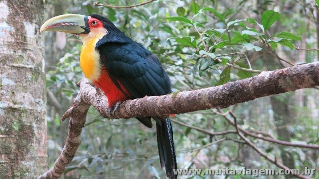 Não deixe de incluir no roteiro por Foz do Iguaçu um passeio pelo Parque das Aves