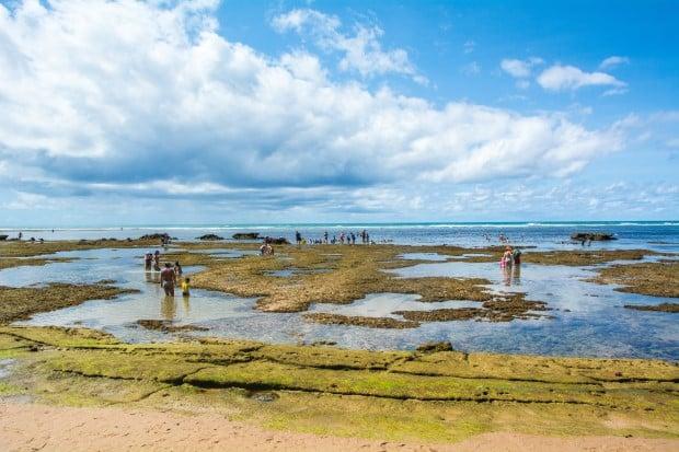 Algumas piscinas naturais atraem crianças e famílias na praia do Forte, na Bahia