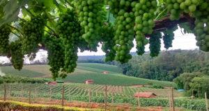 Existem hotéis-fazenda e lugares baratos para visitar no Circuito das Frutas de SP